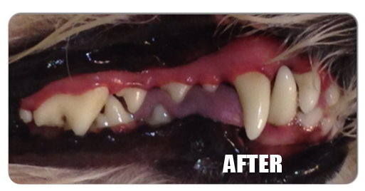 dental-cleaning-service-for-dogs-after